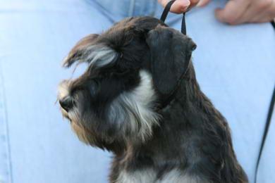 puppy - stene