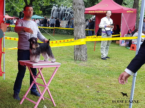 House Kazak Iwama (Recognition's United Actions x House Kazak Majra) - open class - CAC, CACIB