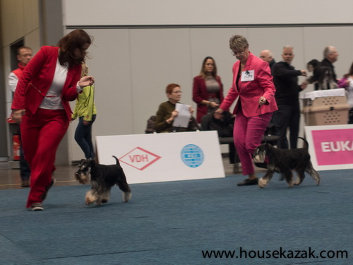 "Little Boy Vis a Vis ""Sato"" (Repitition's Life of Crime & Ayala Vis a Vis)- excellent placed 3rd in veteran class"